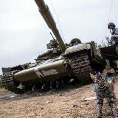 Cat from National Guard of Ukraine