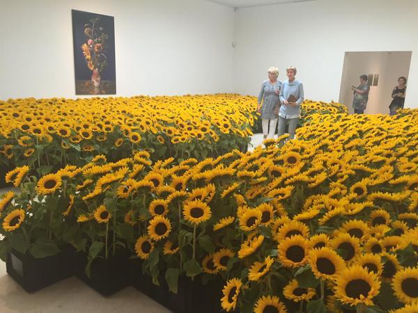 Sunflower memorial Amsterdam MH17 ir uaposition