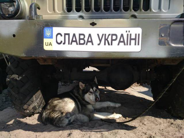 ukraine guard dogs ir uaposition